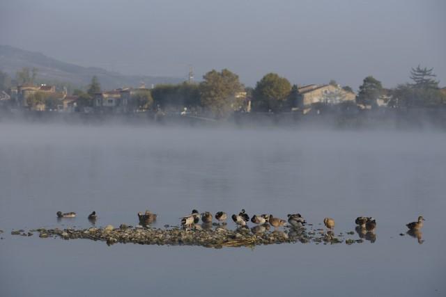Balade nature commentée sur le patrimoine fluvial